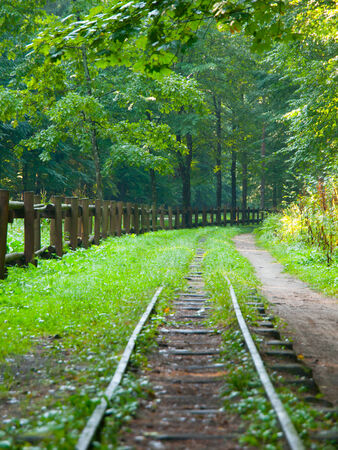 forest railway: Railway track in the green forest passage