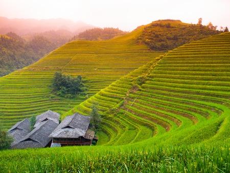 Dragons backbone rice terraces and traditional village, PingAn, Guangxi, China