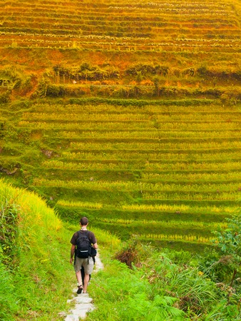 the backbone: Tourist on Dragons Backbone Rice Terraces, Longsheng, Guangxi, China