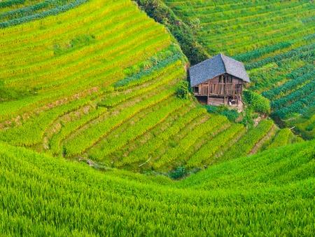 ドラゴンのバックボーン棚田、龍勝、中国広西省の木造住宅 写真素材