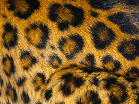 detailed view: Detailed view of leopard skin with black circlces