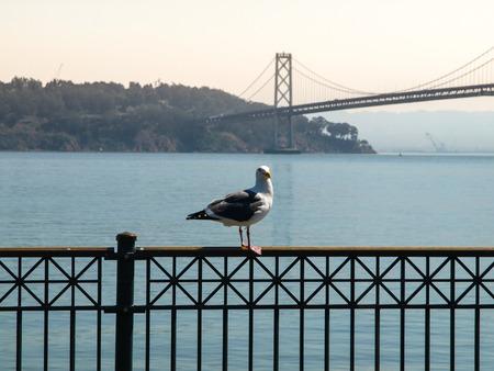 bay bridge: Seagull and Oakland Bay Bridge in background, San Francisco, Californina, USA