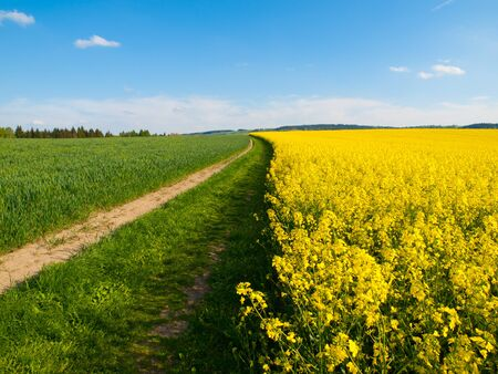 bio diesel: Rape plant field and country road on its edge, typical czech spring landscape with color combination of green, blue and yellow Stock Photo