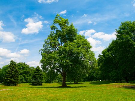 groene boom: Green tree in a meadow with blue summer sky Stockfoto