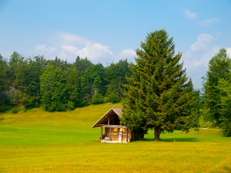 wooden hut: Wooden hut and tree in the middle of meadow, Slovenia