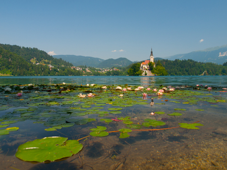 bled: Bled Island with St. Marys Church of the Assumptionon and Bled Lake with water lilies, Bled, Slovenia