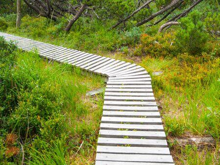 erzgebirge: Narrow wooden hiking trail in the grass of peat bog area, Georgenfelder Hochmoor, Germany