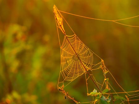 sol naciente: Triagle tela de araña en un prado iluminado por el sol naciente