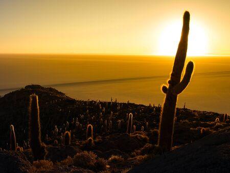 incahuasi: Sunrise with sun hidden behind cactus on Isla Incahuasi, Salar de Uyuni, Bolivia
