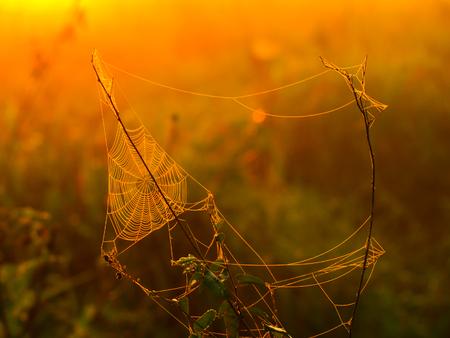 sol naciente: Triagle tela de ara�a en un prado iluminado por el sol naciente