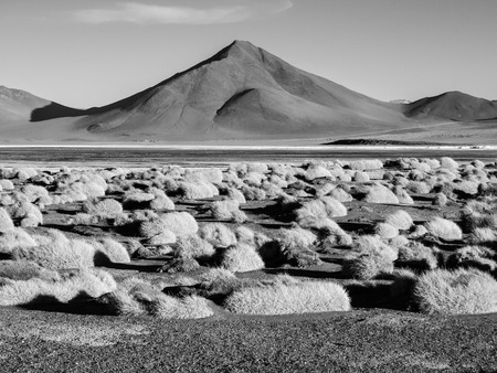 lipez: High peaks and typical grass clumps at Laguna Colorada in southern bolivian Altiplano, black and white image