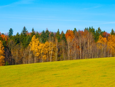 grass: Autumn meadow and colorful forest under the blue sky