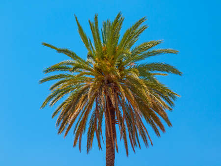 lonesome: Lonesome palm tree on a blue sky background