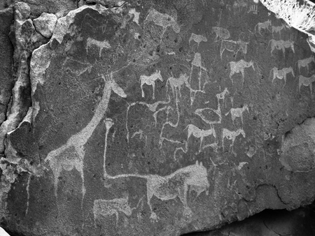 prehistoric animals: Prehistoric Bushman engravings - Lion Plate with Lion Man and other animals and symbols, Twyfelfontein, Namibia. Black and white image. Stock Photo
