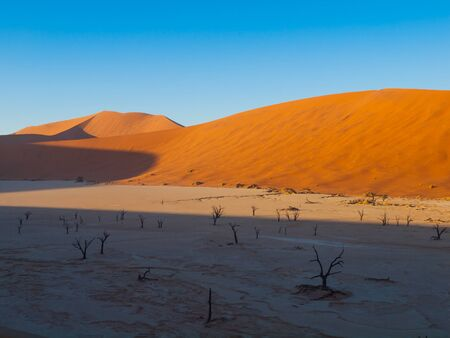 namib: Dead acacia trees and red dunes of Namib desert, Namib Naukluft National Park, Namibia Stock Photo