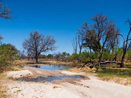 okavango delta: Flooded road with ford in Okavango delta, Botswana Stock Photo