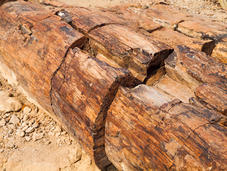 detailed view: Detailed view of petrified tree trunk, Petrified Forest, Namibia