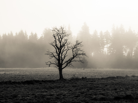 lonesome: Lonesome tree in misty autumn landscape. Black and white image.