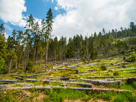 strom: Windfall in coniferous forest after strong devastating strom