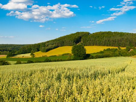 blue summer sky: Summer hilly landscape withe green field, forests, blue sky and white clouds, Central Bohemia, Czech Republic