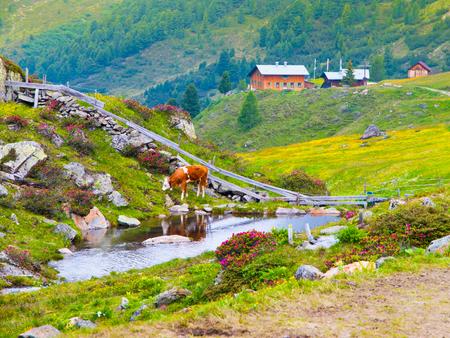 mountin: Alpine landscape with creek, cow and mountin cottage, Tirol Alps, Austria