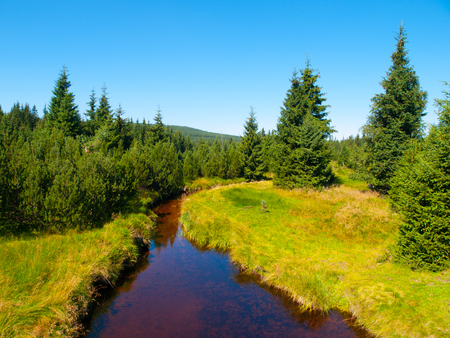 czech: Small mountain creek in the middle of green meadows and spruce forest, Jizera Mountains, Czech Republic
