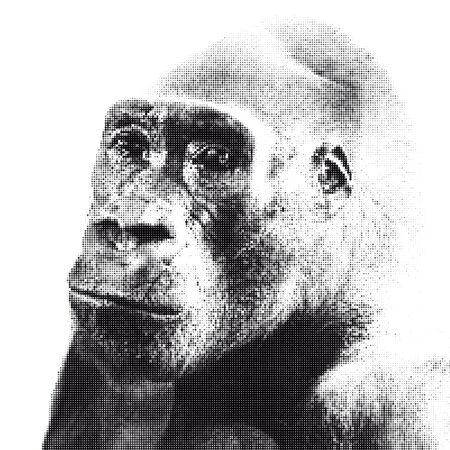 gorila: Halfrone portrait of gorilla with sad look Illustration