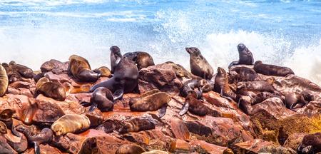stone lion: Brown fur seal, Arctocephalus pusillus, colony at Cape Cross, on Skeleton Coast of Atlantic Ocean, near Henties Bay in Namibia, Africa.
