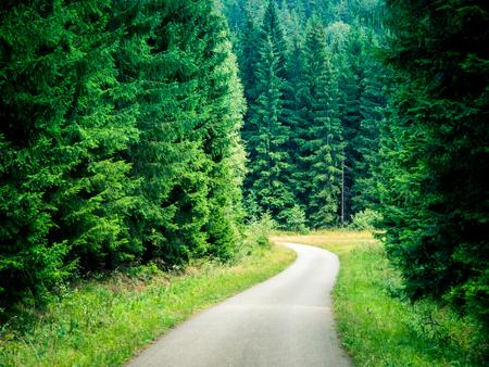 Narrow asphalt road int he green coniferous forest.