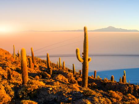 bolivian: Salar de Uyuni salt plains with large cactuses of island Incahuasi at sunrise time, Andean Altiplano, Bolivia, South America.
