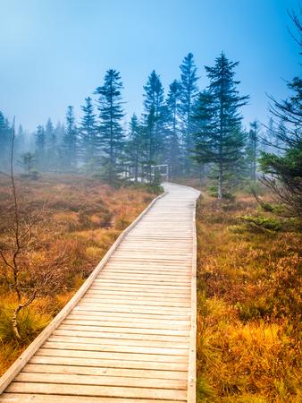 turba: Wooden path in peat bog Bozi Dar, Czech Republic. Colorful autumn landscape scene Foto de archivo