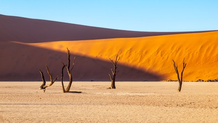 Desolated dry landscpe with dead camel thorn trees in Deadvlei pan with cracked soil in the middle of Namib Desert red dunes, Sossusvlei, Namibia, Africa.