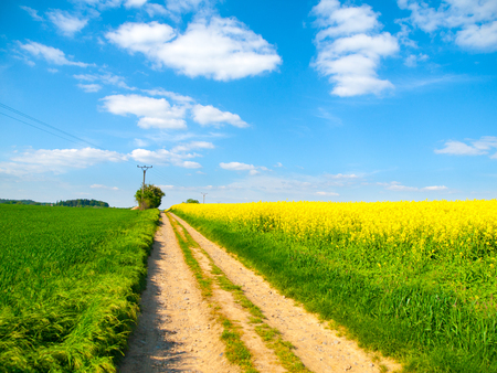 Country road in a yellow field of rapeseed. Stock fotó