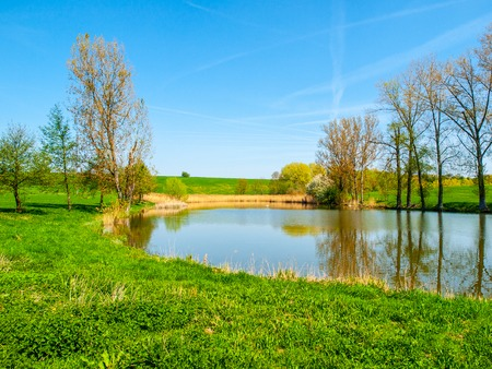 Small pond with row of trees in the middle of green rural landscape on sunny summer day.