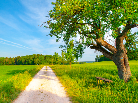 Czech rural landscape. Small wooden bench under the green leafy tree beside country road. Idyllic place to have a rest.