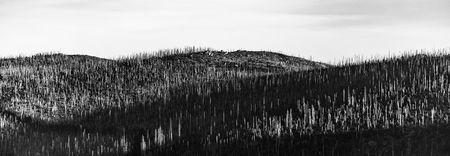 Devasted forest in caues of bark beetle infestation. Sumava National Park and Bavarian Forest, Czech republic and Germany. View from Tristolicnik, Dreisesselberg, to Plechy, Plockenstein. Black and white image.