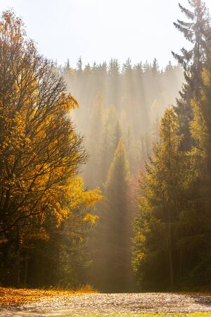 Autumn forest scene. Ray of lights in morning haze.