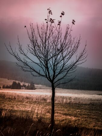 Small lonesome tree in autumn time. Vintage style.