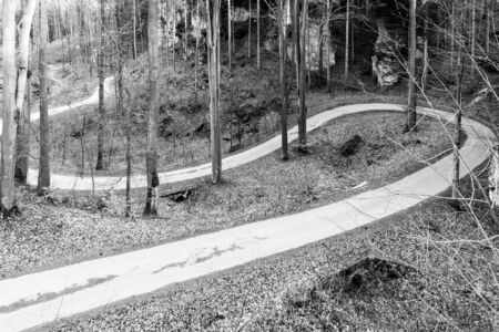 Narrow asphalt road serpentines winding through beech forest. Black and white image.