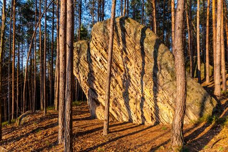 Sandstone rock in pine forest. Illuminated by sunsetting sun.