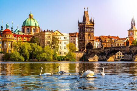 View on Charles bridge and Swans on Vltava river in Prague at sunset, Czech Republic.