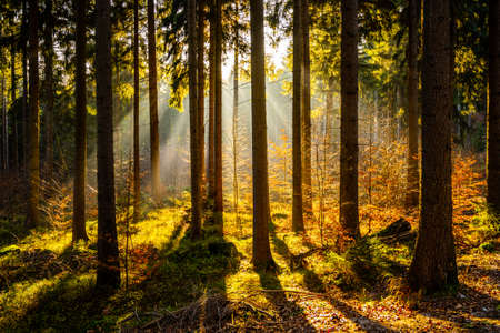 Sun beams in autumn forest. Misty mood in autumnal fantasy woodland