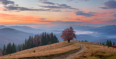 view sunset and lonely tree in mountains Carpathians photo