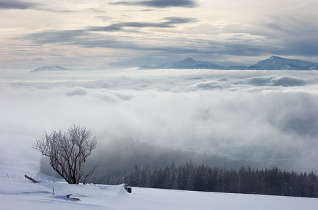 skying: Carpathians in the winter fog and snow-covered forest