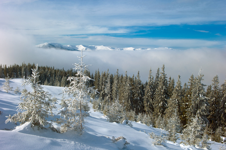 skying: snow covered trees in the fog mountains in the Carpathians