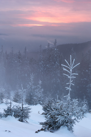 skying: snowy mountains Karpaty in winter evening light amber