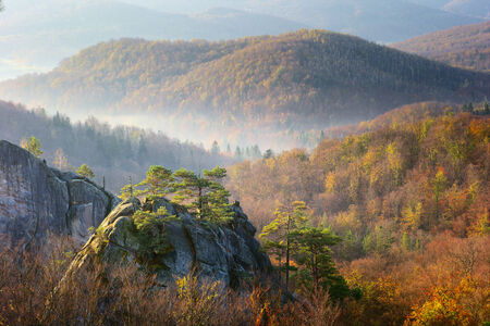 among autumn forest look big rocks overgrown with trees photo