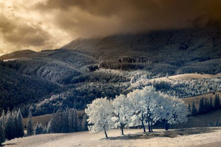 Infrared landscape. white wood middle of the mountains. thunderstorm.