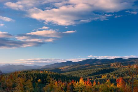 autumn forest in the Carpathian mountains, lit by evening sunlight