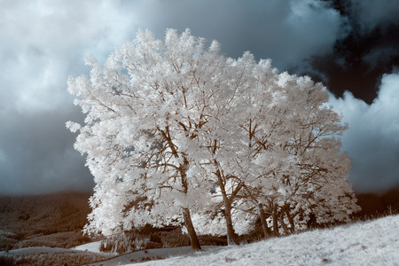 Infrared landscape. white wood middle of the field. sky and dramatic clouds